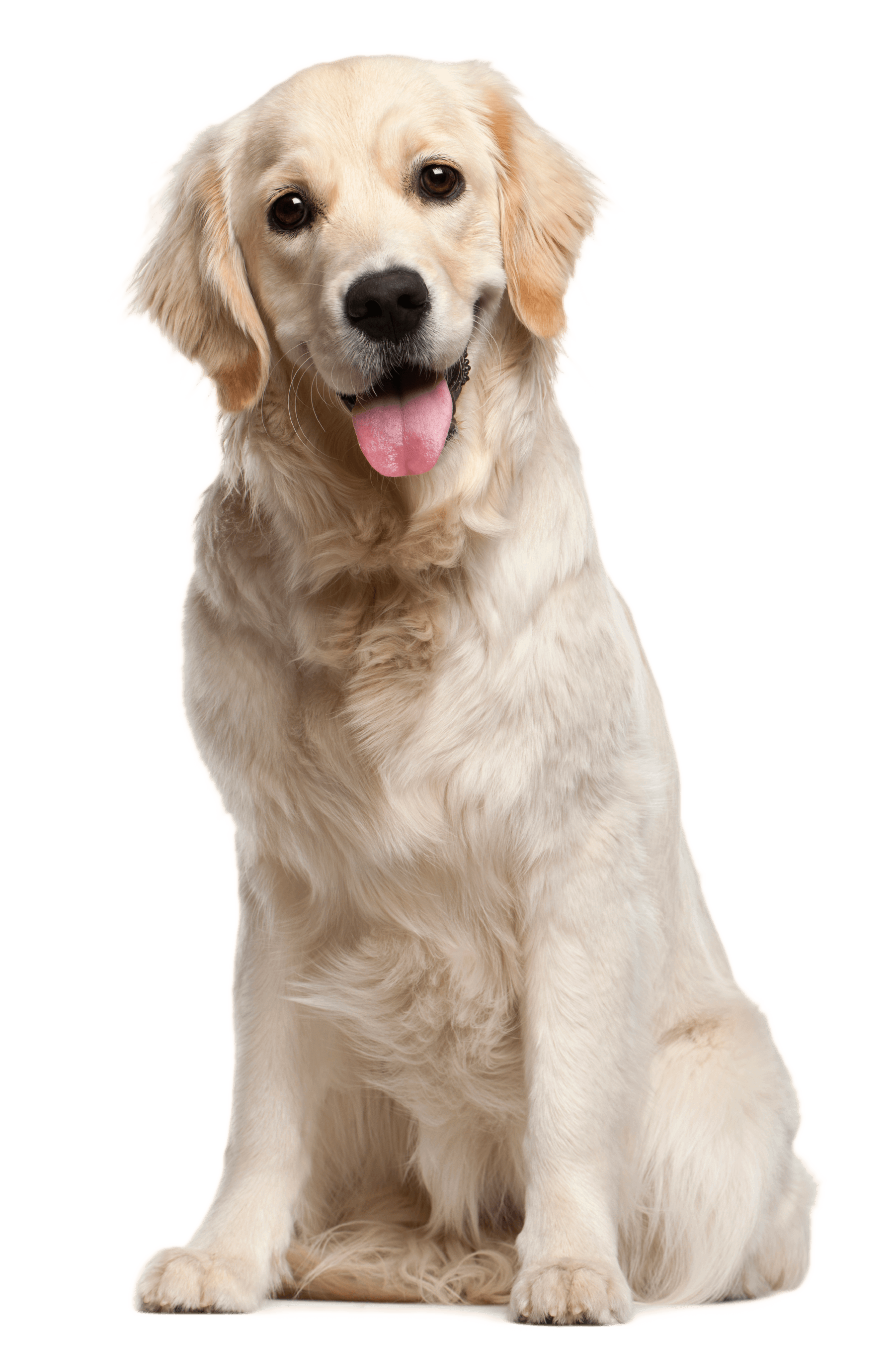 kisspng-dog-grooming-puppy-cat-pet-white-dog-5a70ac435552b0.5161753115173335713495